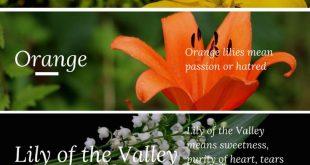 10+ Best Funeral Flowers