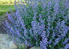 10 of the Longest Flowering Perennials for Your Garden
