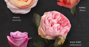 163 Beautiful Types of Flowers + A to Z With Pictures
