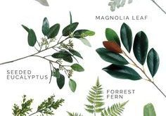 A Guide to Trending Greenery. Types of greenery that are trending for weddings a...
