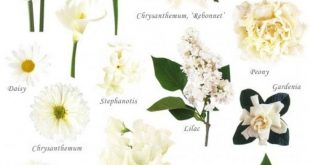 Awesome Types Of White Flowers For Wedding
