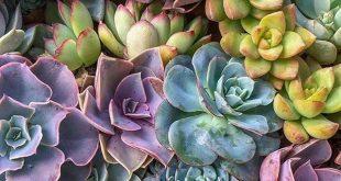 Community of Succulents, Cactus & Plant Lovers