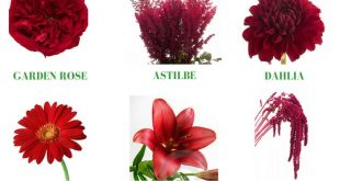 Different types of flowers with names, meanings and types of flowers with pictur...