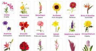 Flowers, Their Meanings, And Which Ones NOT To Give Your Valentine