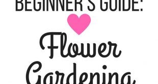 How to start a flower garden for beginners! A step-by-step guide