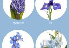 Our Favorite: Blue Flowers