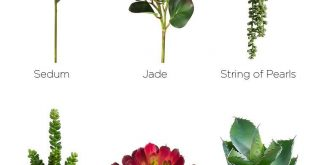 Types of Succulents. Add succulent accents to your wedding bouquets or make you...