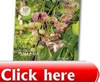 wg-hydrangea-guide