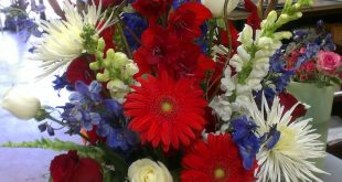 Red, White and Blue Flowers---just in time for July 4th!!  Gerbera Daisy, Blue D...