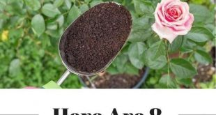 Stop Tossing Old Coffee Grounds - Here Are 8 Ways They Can Take Your Garden To The Next Level