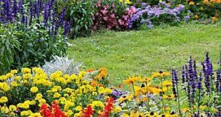 Wiederholung von Rudbeckia Salvia Tagetes und Ringelblume um den Zusammenhalt in...