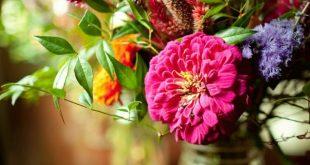 bunte blume wilde rosa grün lila