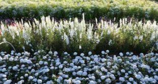 33 trendy flowers garden for beginners cut