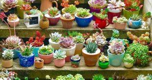 Arten von Sukkulenten und wie man sie für Anfänger pflegt #sukkulente #dekorat...