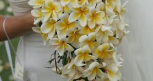 I LOVE plumerias, and have been searching for an example of a plumeria bouquet, ...