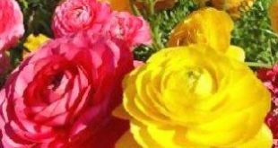 23 Awesome Things You Can Learn From Common Types Of Flowers In Bouquets   commo...