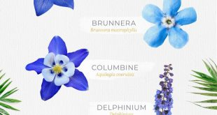 30 Types of Blue Flowers