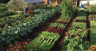 50 Beautifuly Colorful Vegetable Garden Design Ideas #garden #garden #gardendes
