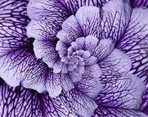 All purple  flowers are beautiful and with meanings of their own. So, which do y...