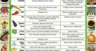 Companion Planting Chart Viele tolle Informationen Video-Tutorial