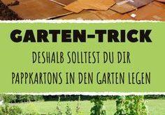 Deshalb solltest du dir Pappkartons in den Garten legen. Das Ergebnis wird dich ...
