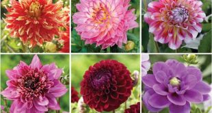 Heres Why You Should Attend Common Types Of Flowers With Pictures | common types...