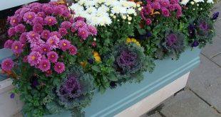 Janice Lufkin Shea's Cormorant Shop Flower Boxes