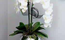 Orchideen in einer silbernen Goldfisch-Schüssel -