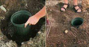 Tolle Ideen, die jeder Gartenliebhaber wissen sollte