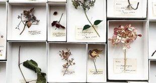 Trocknen Sie Ihre Sommerblumen aus dem Garten oder in der trockenen Sommersonne
