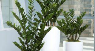 Über 30 schöne Zimmerpflanzen für Ihr Zuhause