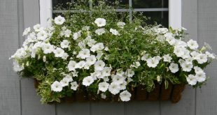 Window box on Potting Shed